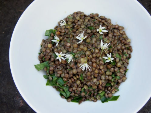 French lentils overhead pic